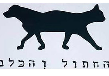 Israel tel aviv cat and dog 1